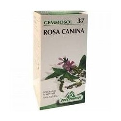 SPECCHIASOL Gemmosol 37 Rosa Canina